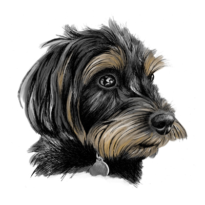 Hand drawn pet portrait